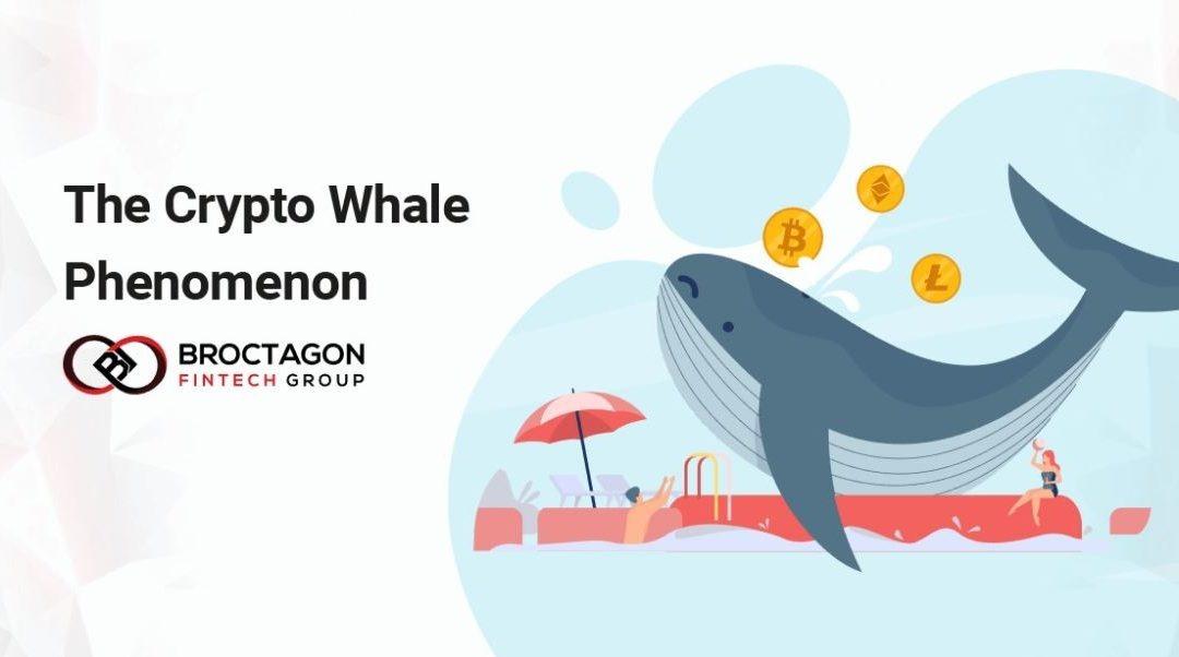 The Cryptocurrency Whale Phenomenon: How Do Investors Thread Volatility Splashes?